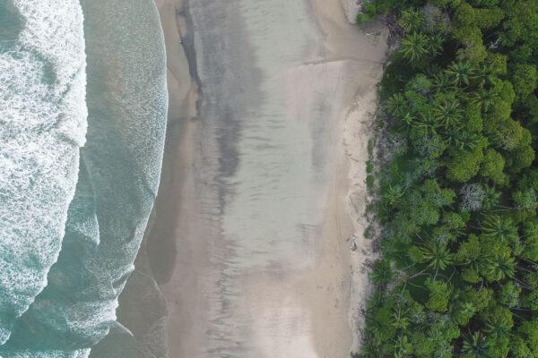bannerforest